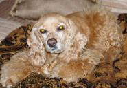 Peaceful Paws Pet Memorial - Gina Hull