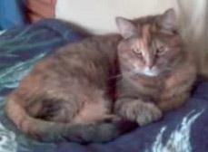 Callie Kitty
