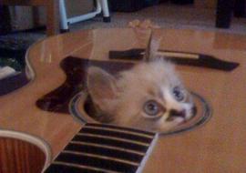 shanti-guitar