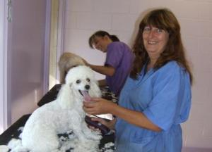 1806 Cindy with Pretty Poodle as she grooms