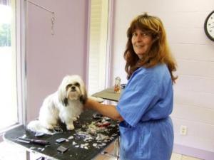 Cindy grooming little shaggy dog