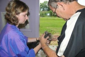 Dr. Tharp checking skin - grooming