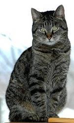 CAT - Baby GROOMING
