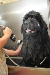 big jack -bath GROOMING