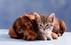 Stray Animal Fund