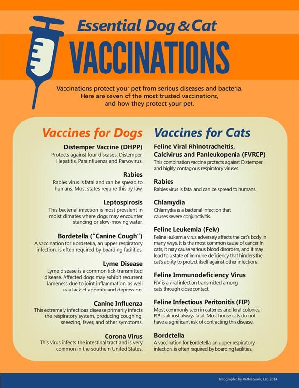 Essential Dog & Cat Vaccinations