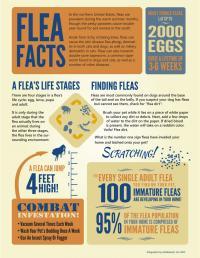 Flea Facts