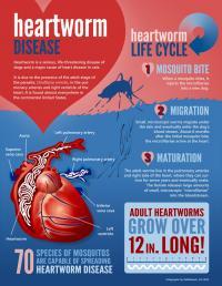 peoria heartworm info