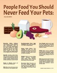 People Food You Should Never Feed Your Pets