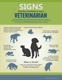 Should You See The Vet?