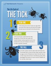 The Life Cycle of the Tick