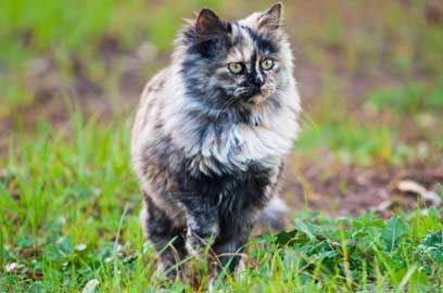 Cats are curious and it's not uncommon for cats to go missing.