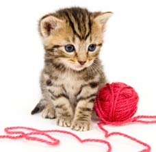 http://vetnetwork.net/pca/articles/news/images/kitten-with-yarn.jpg